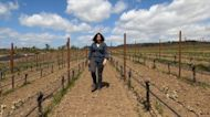 A look at the wine industry of Oregon
