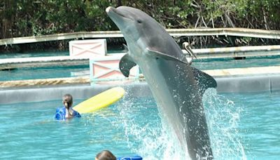 Are the Seaquarium, Jungle Island and Zoo Miami open? Here's the latest on attractions