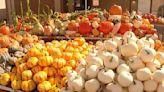 Circleville pumpkin show 2021: schedule, events, times, parking