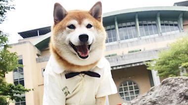 浪浪變校犬/校園找回人與動物原有溫度 全國校犬比賽獲獎名單公佈