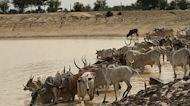 NASA Is Helping Senegalese Herders Find Watering Holes In Barren Landscape