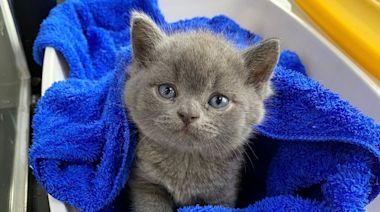 牛磺酸「手工貓機能零食」90→68元 毛小孩大口吃肉也能顧眼睛、心血管