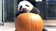 Giant panda cub needs a name: Vote for your favorite
