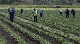Judge blocks debt relief program for farmers of color