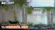 快新聞/11:16花蓮規模5.3地震! 最大震度4級