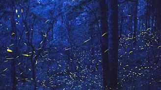 See thousands of fireflies light up a Mexican forest