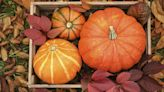 Don't Call It 'Basic'—Pumpkin Is Pretty Much A Superfood