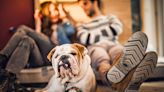 Could Your Dog Have Liver Failure? How to Care for Your Pup Throughout Their Battle With the Disease