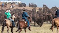Joey Jones joins South Dakota Gov. Kristi Noem for a buffalo roundup