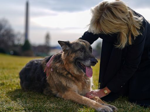 Biden's dog Champ has died, White House says