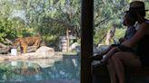 美國家動物園:9隻獅子老虎COVID檢測呈陽性