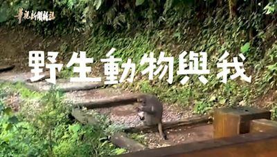 藍腹鷴跟蹤 松鼠刨樹皮 疫後 回歸大自然  華視新聞雜誌