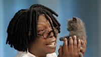 20 celebrities who have adopted rescue animals