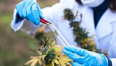 6 Best Cannabis ETFs of 2021