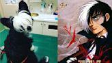作家愛犬黑白毛太像「怪醫黑傑克」 獸醫笑:看起來醫術比我高超!