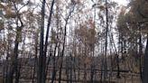 澳洲野火關鍵課題:找回原民治火技術、反思進逼森林的都市擴張
