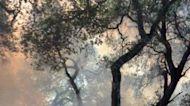 Prescribed Burn in Santa Cruz County Sparks Larger Estrada Fire