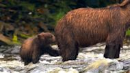 Eden: Untamed Planet: Alaska: Last American Frontier