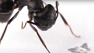 史上最小人造飛行結構,科學家開發能御風飛行並追蹤空污的微晶片