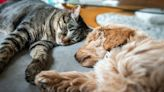 The CDC Just Banned These Pets Amid Safety Concerns