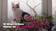 10 Ways to Save Money on Pet Expenses