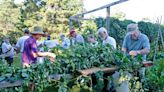 Hop right on this Island tradition - The Martha's Vineyard Times