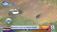 Cow missing after escape from California slaughterhouse resurfaces days later