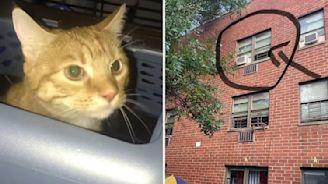 Cat Survives Owner's Death