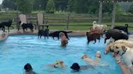 太Happy了!39隻狗狗一起享受夏日的泳池派對!