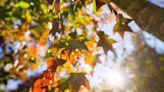 美哭!台灣北部賞楓秘境三路線 一窺大自然絢麗的彩色畫布--上報