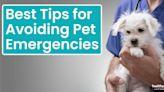 Best Tips for Avoiding Pet Emergencies