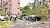 烟花災情 北市水淹河濱步道、基隆樹倒壓5車