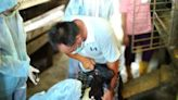 新北施打羊痘疫苗 確保動物防疫安全