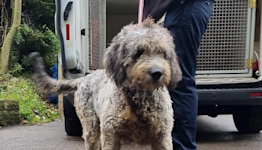 Dogs bought in lockdown 'disguised as strays' and abandoned at rescue centres