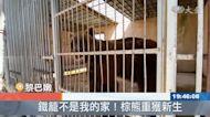 生活局限於動物園 黎巴嫩兩棕熊將野放