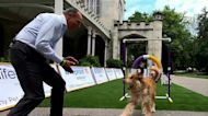 Behind the scenes as Westminster Dog Show held outside for the first time