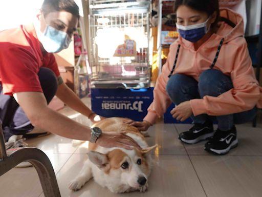 新北38處寵物健康生活站提供6大服務 已服務17萬人次 | 生活 | Newtalk新聞