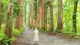 日本長野戶隱神社古道~吉永小百合JR廣告景點,四百年巨杉林道充滿隱世神秘氛圍!