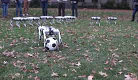 Watch these adorable robots frolic in leaves - CNN Video