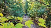 Exploring a remote 'road' amid fall colors