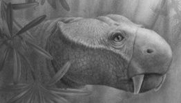 Paleontologists trace the evolution of tusks to toothy Triassic creatures