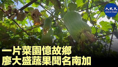 一片菜園憶故鄉 廖大盛蔬果聞名南加