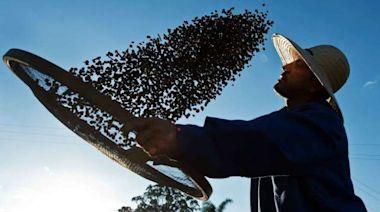巴西咖啡豆受寒害衝擊 期貨價格飆7年新高 | Anue鉅亨 - 農作