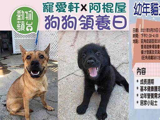 周末好去處 5月下旬兩大寵物活動 照顧幼貓犬講座+毛孩領養日   蘋果日報
