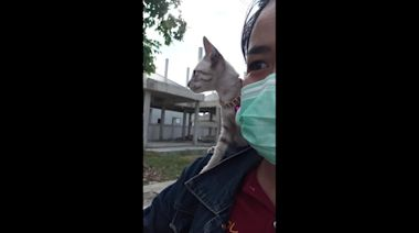 Kitten rides on owner's shoulder on motorcycle