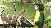 How A Preschooler Helped Solve A Lemur Kidnapping From The San Francisco Zoo
