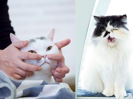【有片】5式簡易貓咪按摩推拿!貓奴一學即懂!