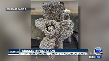 Colorado inspectors 'completely over-run' by mussel-infested boats