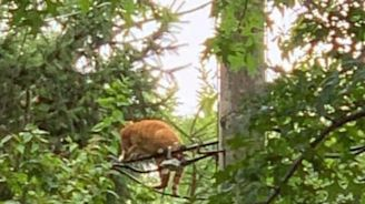 Firefighters Rescue Cat From Power Line