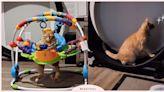 最喜歡睡在嬰兒搖椅!「橘貓」總是「跟寶寶搶玩具」,伸腳閉眼的模樣看起來超愜意!   寵物圈圈   妞新聞 niusnews